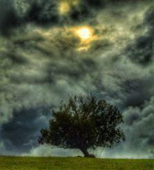 Baum mit dunklen Wolken Bild hochkant