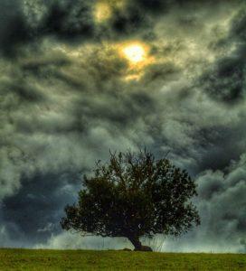 Baum mit dunklen Wolken Bild klein